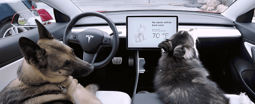 tesla, AI, Tesla's Dog Mode left pets at risk