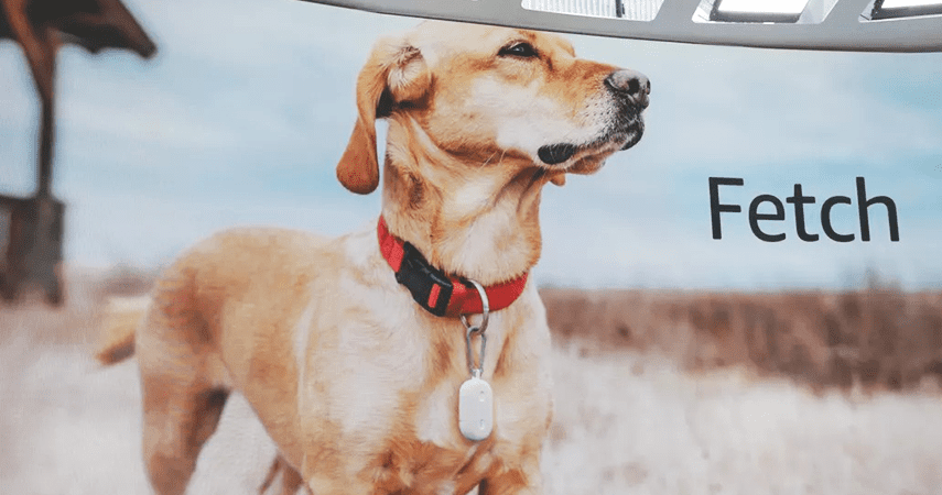 Amazon, Connectivity, Amazon reveals Fetch pet tracker and Sidewalk network